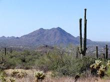 Cacti in the Sonoran Desert