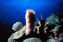 Glass sponges and corals
