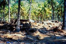 1992 tsunami damage in Indonesia