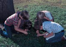 courtesy of USDA NRCS)""